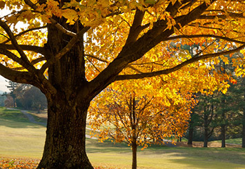 Autumn Romance: The Top 5 Fall Activities for Couples