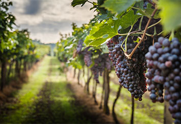 The 3 Best Wineries in the Poconos