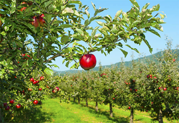 The Top 3 Apple Orchards in Pennsylvania